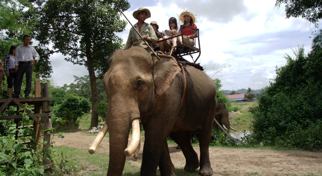 Escursione Sull'Elefante