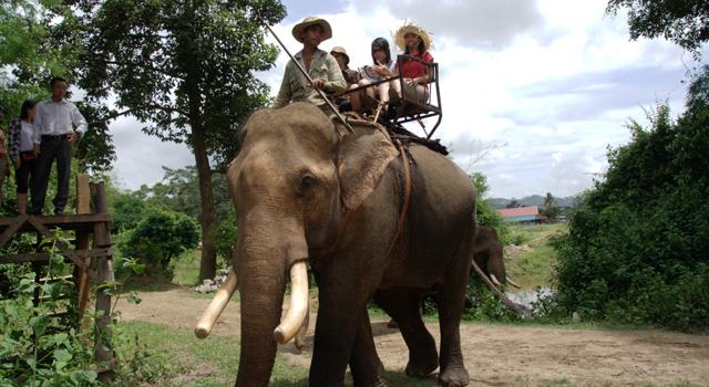 Elephant riding
