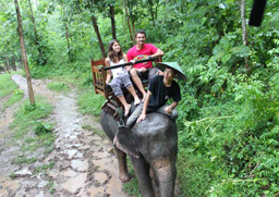 Elephant excursion in Buon Ma Thuot