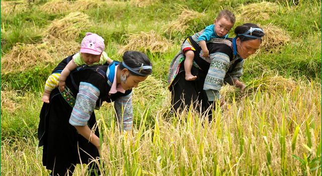Le donne di H'Mong nero a Sapa