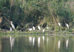 Thung Nham - Il paradiso degli uccelli