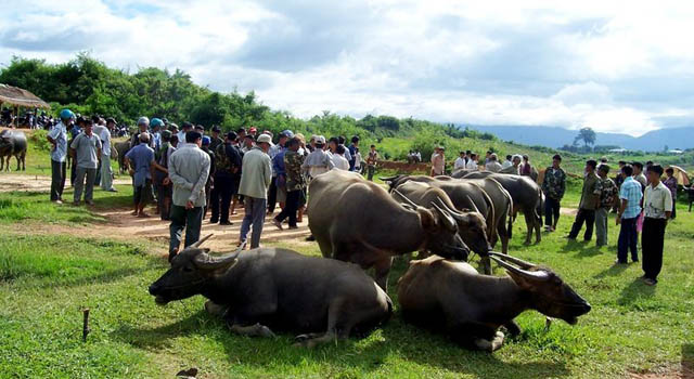 The water buffalo market