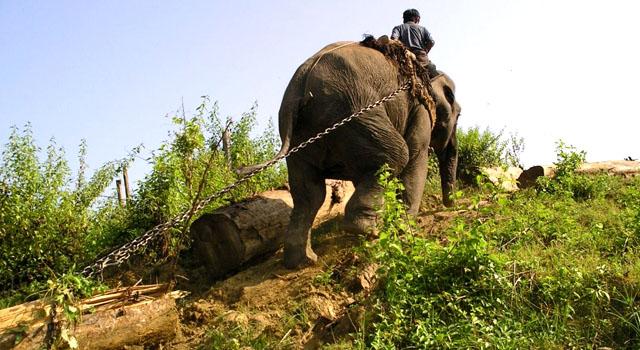 Il campo degli elefanti di Taungoo