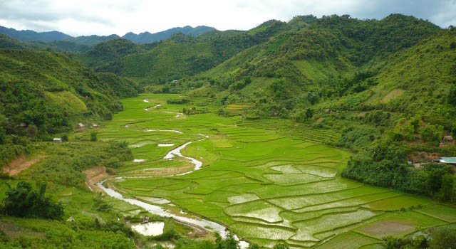 Rice field landscape