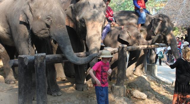 Campo di Elefanti