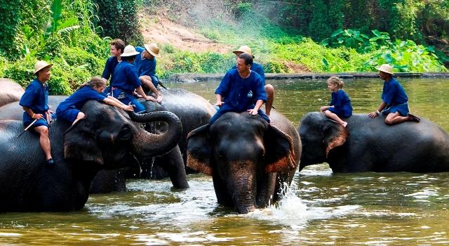 Il centro della conservazione di elefanti della Thailandia
