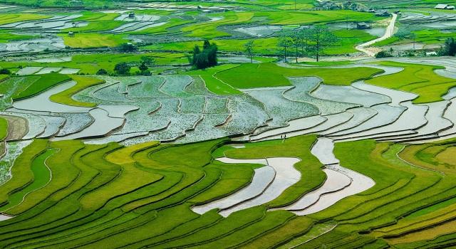 La visita ai campi di riso