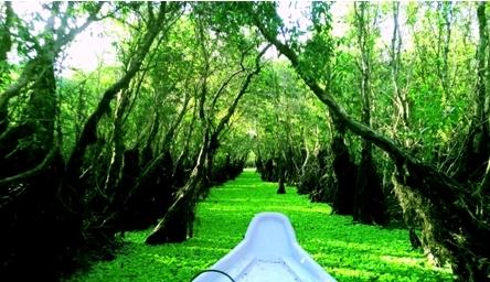 Der Tra-Su-Wald