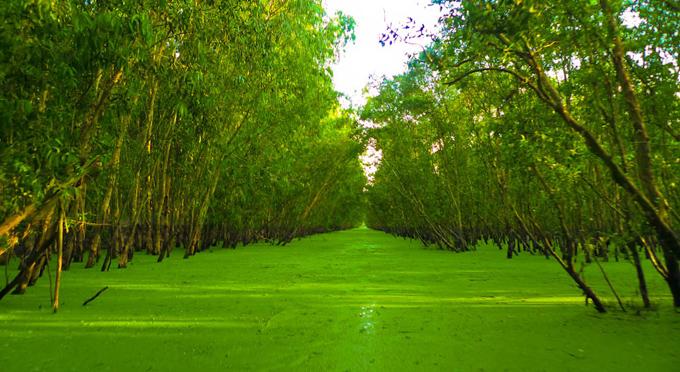 foresta - melaleuca - tra - su -6