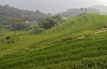 La réserve naturelle de Pu Luong