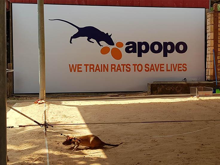 Apopo ONG