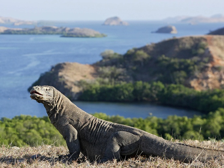 Encounter Komodo Dragons