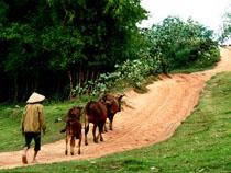 Passionately Vietnam