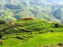 Asiatica Travel Recensioni - Testimonianze di Signore. Bo Enrico