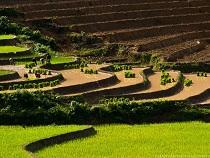 Asiatica Travel Recensioni - Testimonianze di Signore. Landa Grazioli