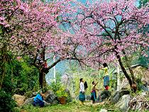 Asiatica Travel Recensioni - Testimonianze di Signora. Donella Camolese
