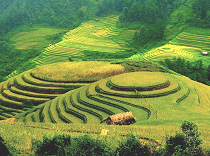 Asiatica Travel Recensioni - Testimonianze di Signore. Biagio Germano