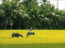Asiatica Travel Recensioni - Testimonianze di Signora. Eva Banchelli