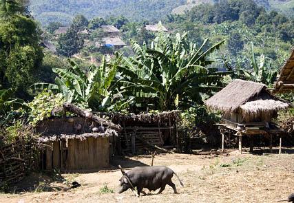 Laos, Land of Diversity