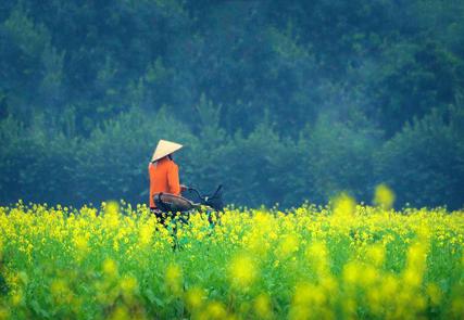 Splendeurs du Vietnam