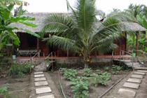 Ben Tre, la capital de los bosques de cocotero